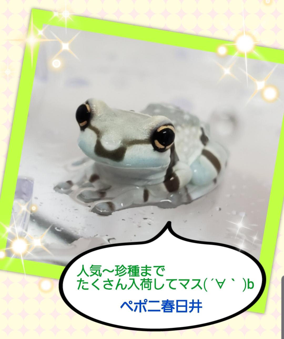 【春ペポニ】カエルちゃんズ。SALE開催中‼️