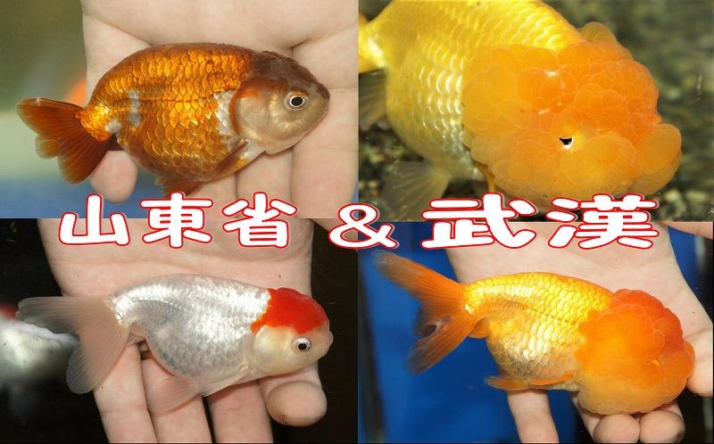 ☆☆山東省&武漢☆☆