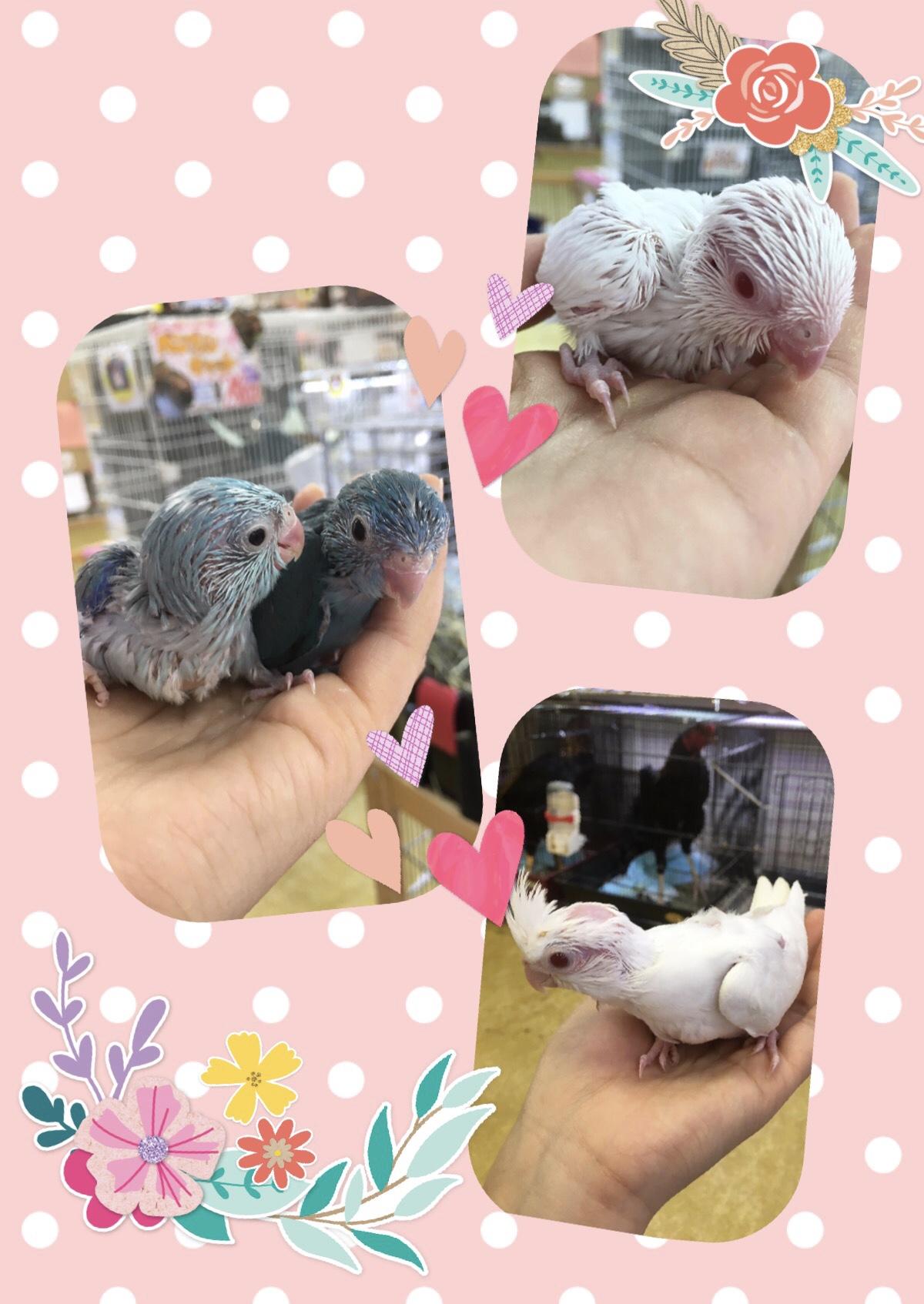 【インター小動物】最小の鳥達が最強に可愛いサイズで爆着です!✨