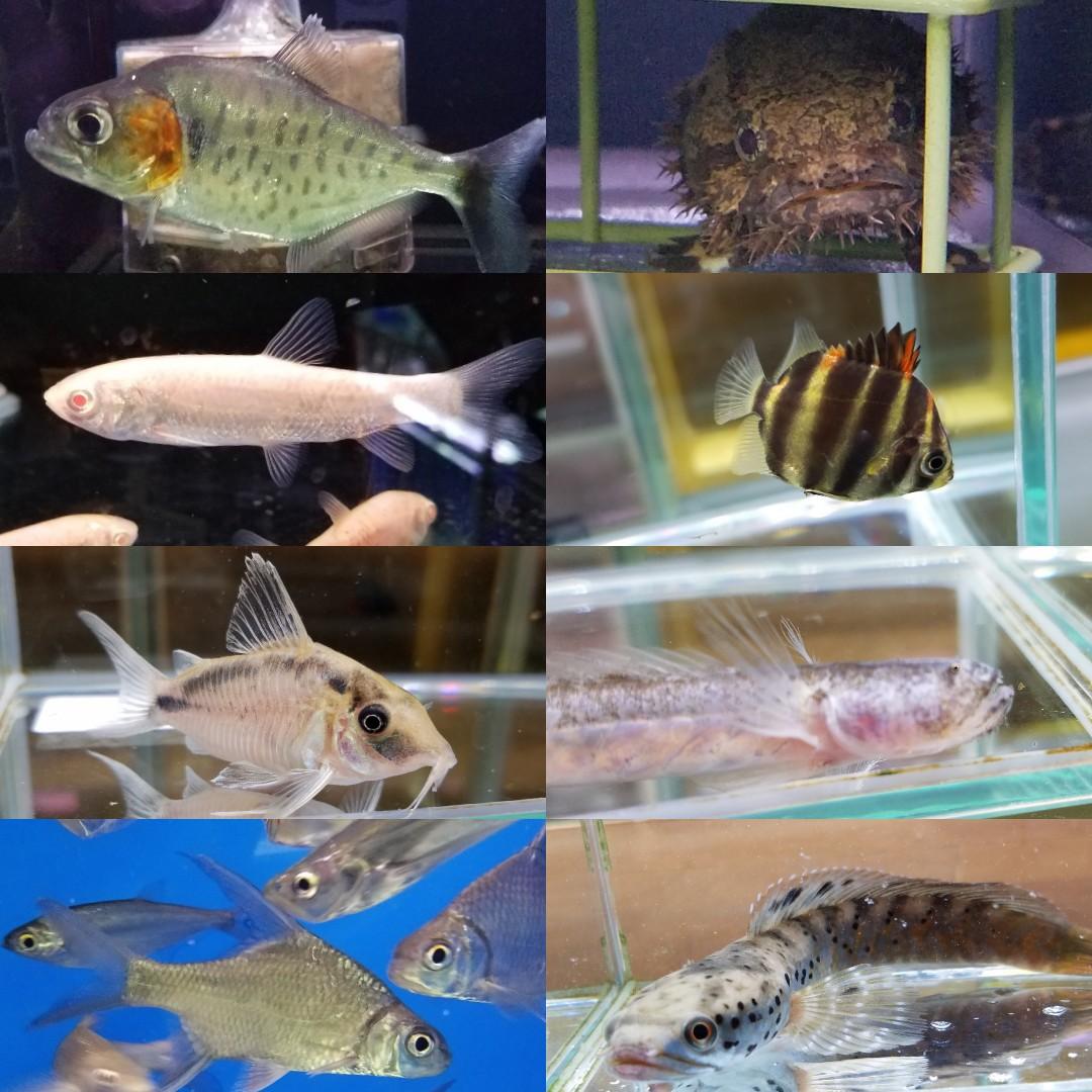 新入荷 春日井熱帯魚