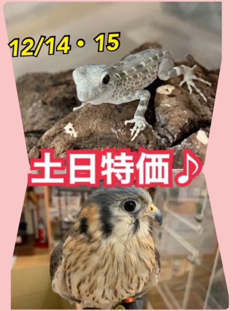 【春ペポニ】14・15日の土日特価!