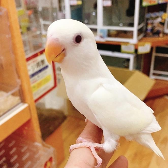 【春ペポニ】歳末大売出しメニュー@小動物