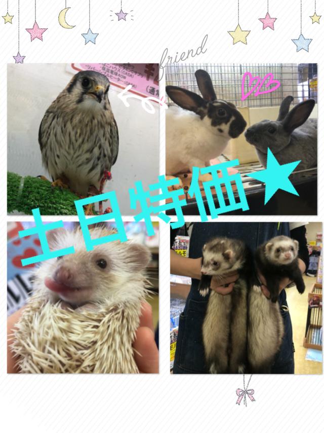 【インター小動物】2020年初の土日特価は連休で激アツです!!
