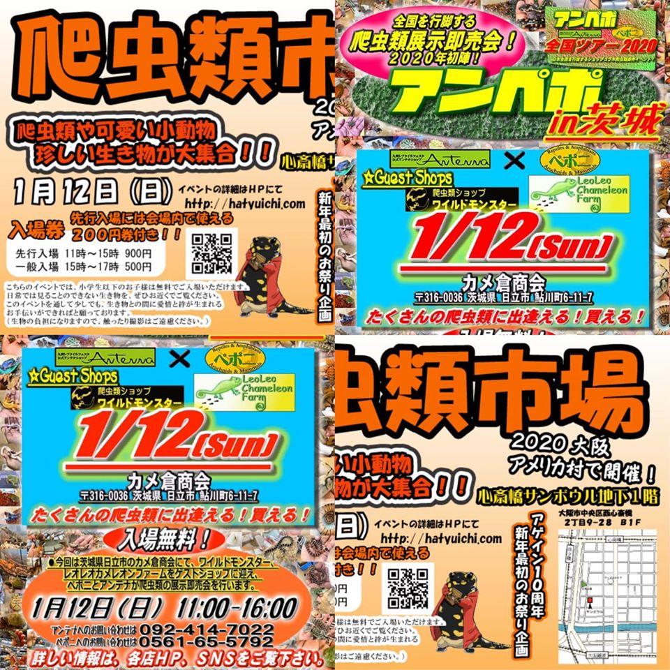 いよいよ今週末!1/12(日)は! 爬虫類市場2020大阪アメ村!