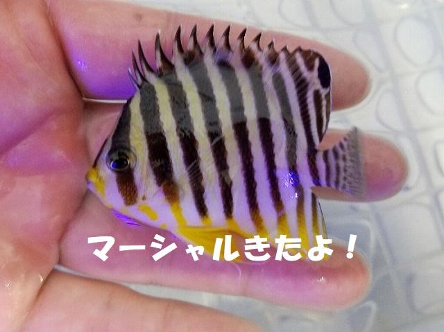 春日井店 海水ブログ 200111