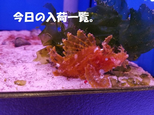 春日井店 海水ブログ 200118