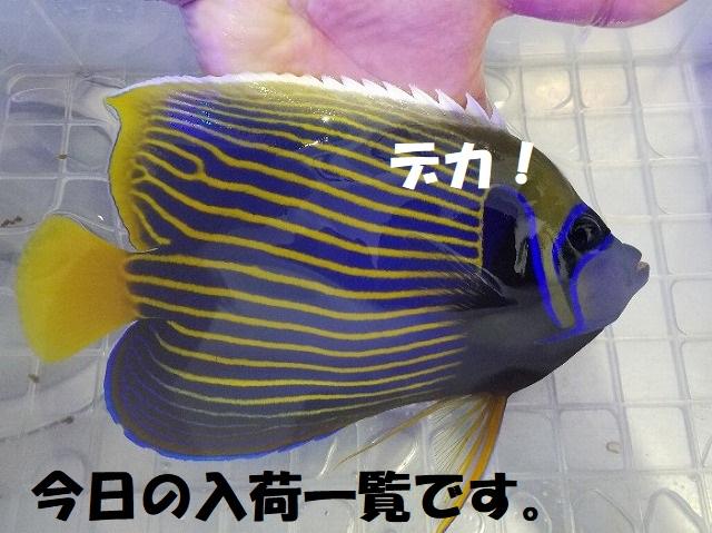 春日井店 海水ブログ 200121