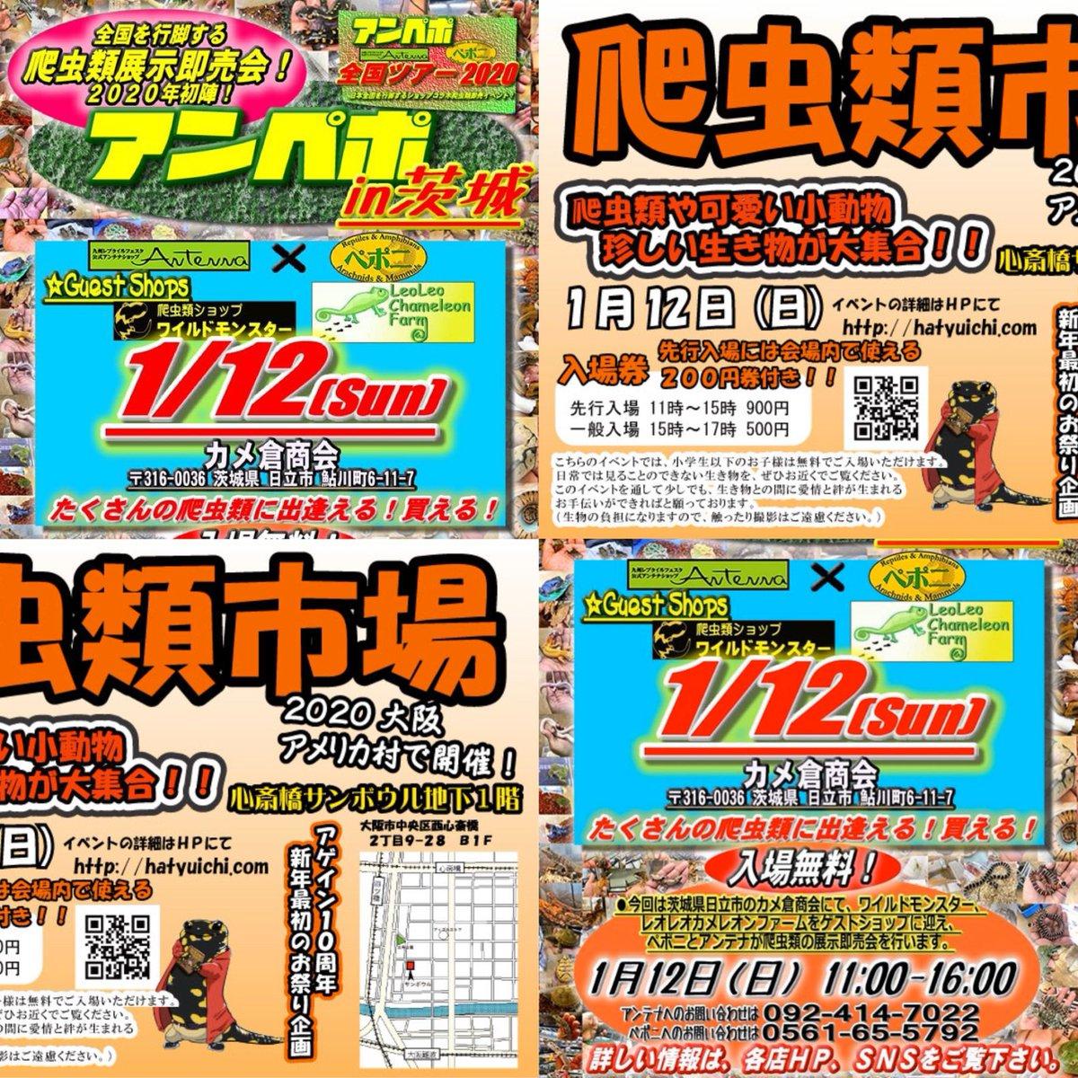 アンペポin茨城&爬虫類市場大阪!いよいよ明日1/12(日)です♪