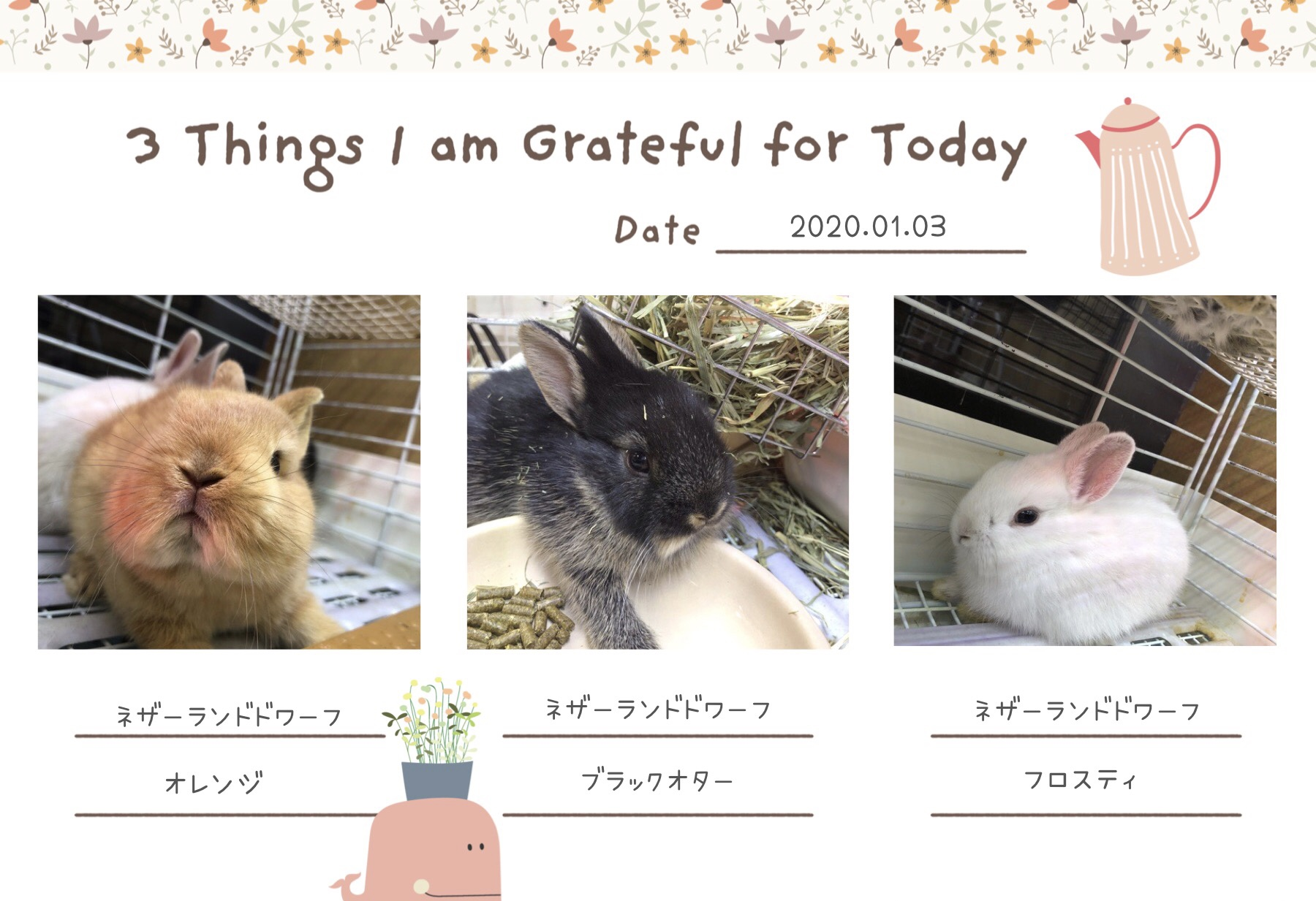 【インター小動物】子年とは関係ない卯のブログ