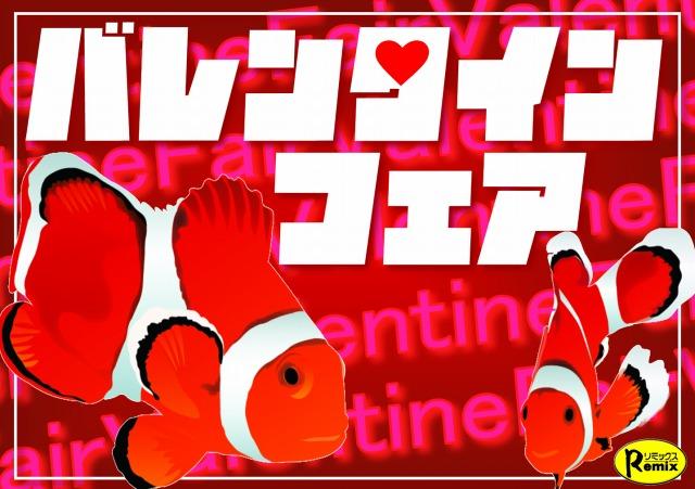 恋の始まり?!『バレンタインフェア』開催!!@インター爬虫類