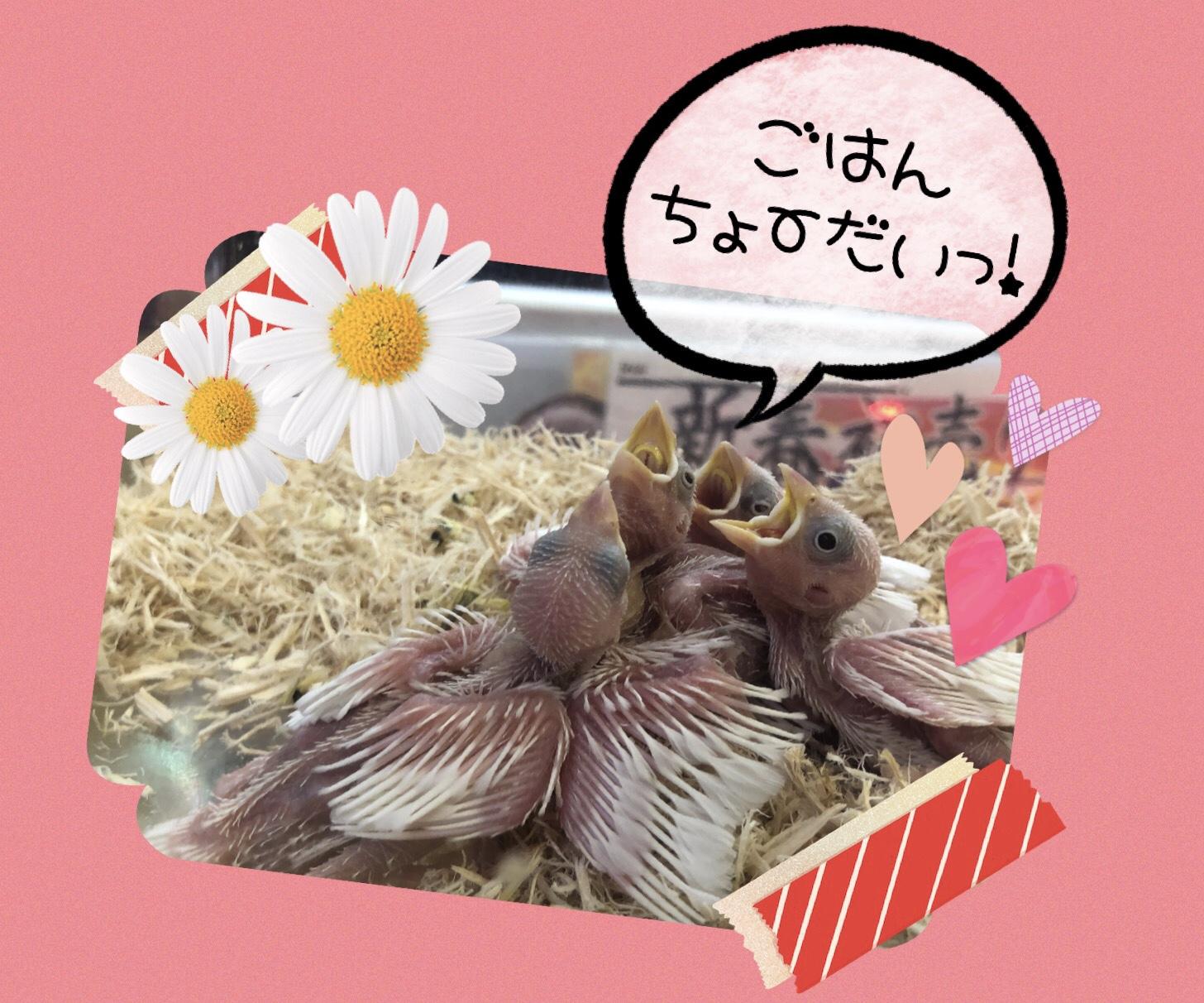 【インター小動物】またまたフィンチ♪♪