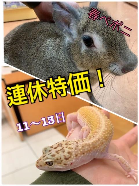 【春ペポニ】3連休だ!激アツ特価!!