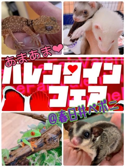 【春ペポニ】激甘♪「バレンタインフェア」スタート!