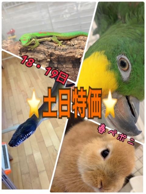 【春ペポニ】週末!土日特価!!