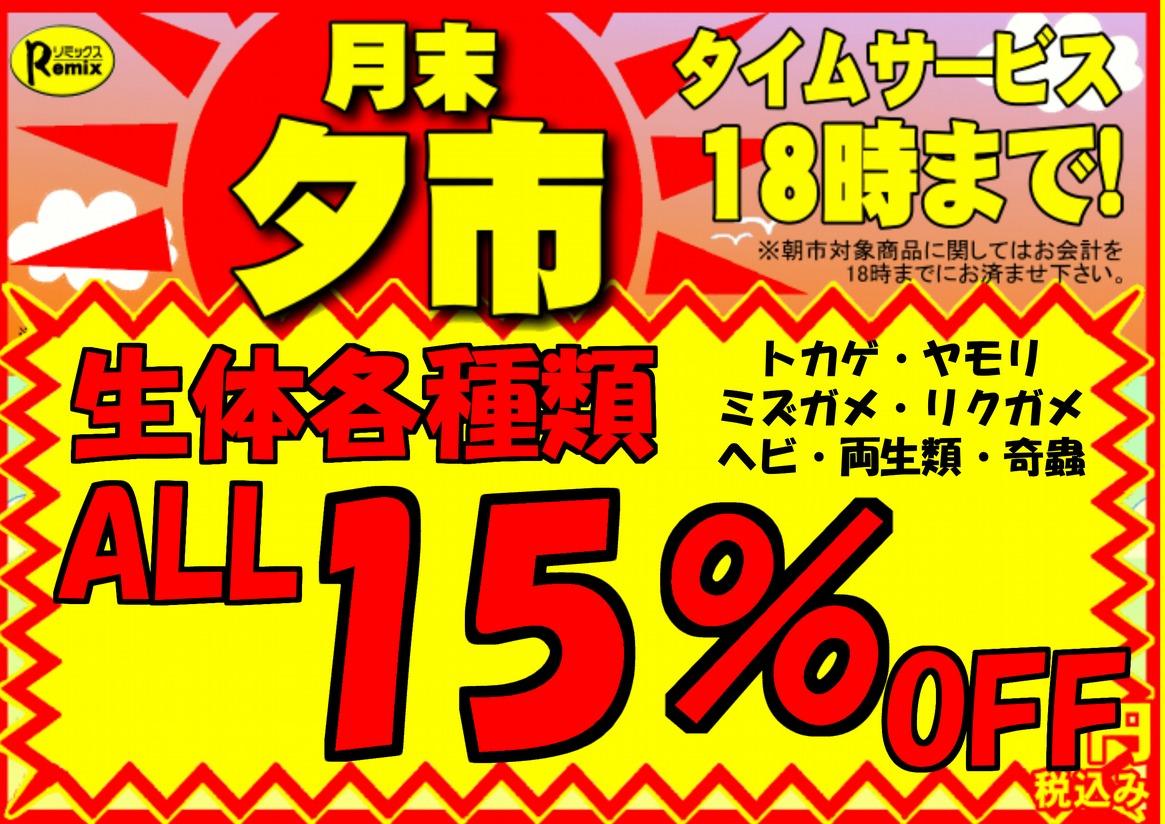 明日は夕市!!生体ALL15%OFF!!@みなとペポニ