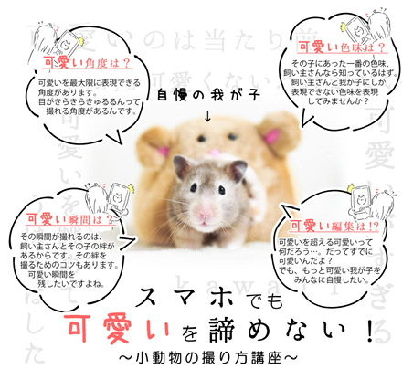 【春ペポニ】「イベント告知」カメラ教室開校決定!