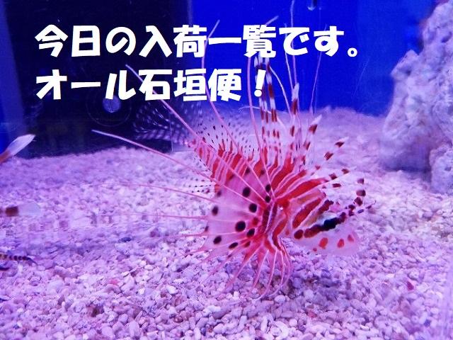 春日井店 海水ブログ 200204