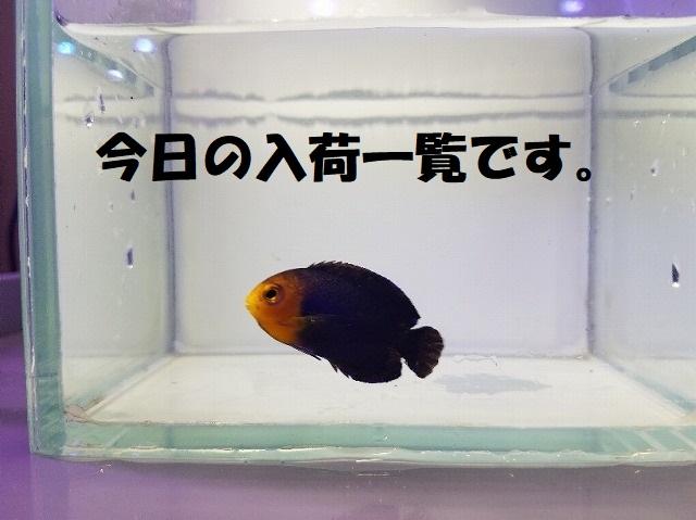 春日井店 海水ブログ 200205