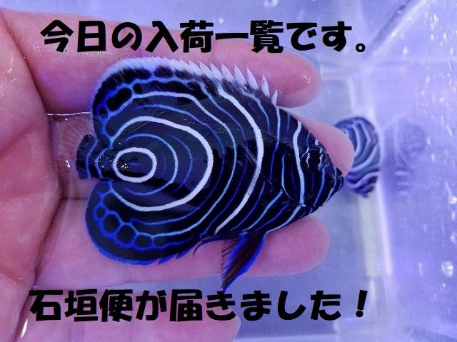 春日井店 海水ブログ 200209