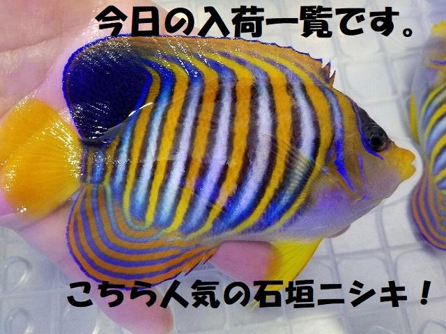 春日井店 海水ブログ 200220