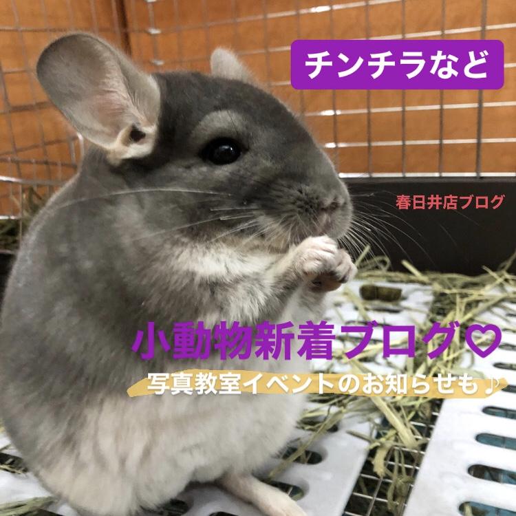 【 春ペポニ 】小動物新着ブログ!
