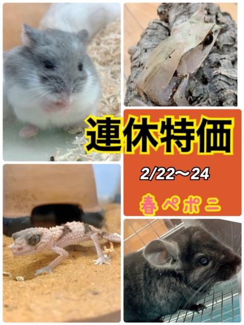 【春ペポニ】連休でお得増し増し!