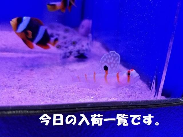 春日井店 海水ブログ 200310