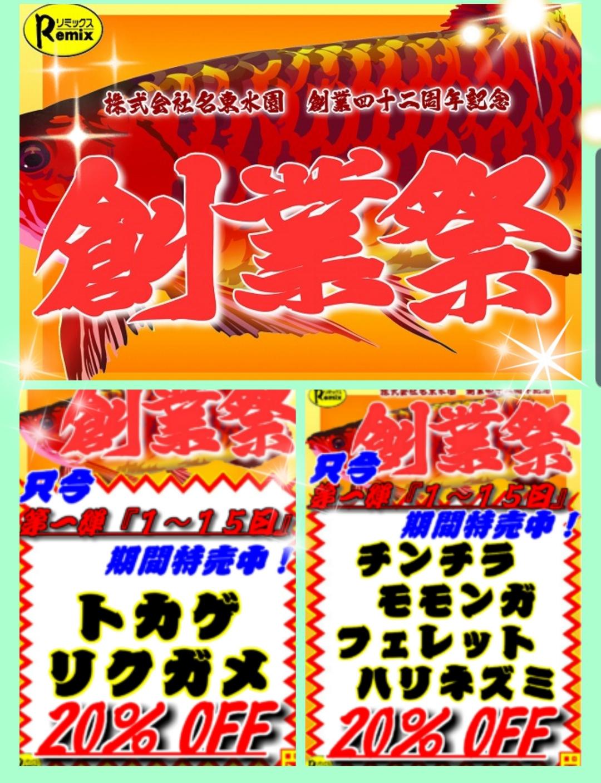 【春ペポニ】ソロモンのトカゲたちが登場!!+ヤモリ