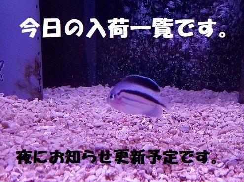 春日井店 海水ブログ 200314