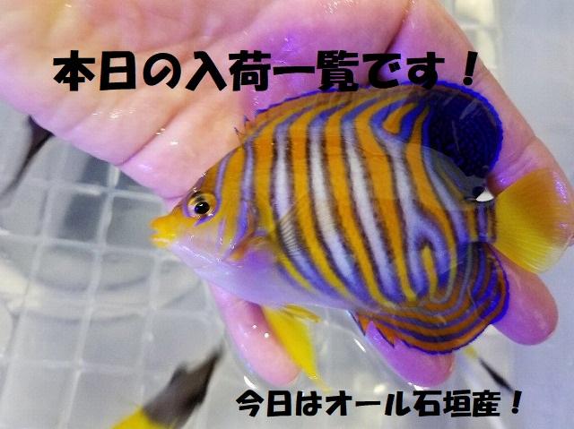 春日井店 海水ブログ 200316