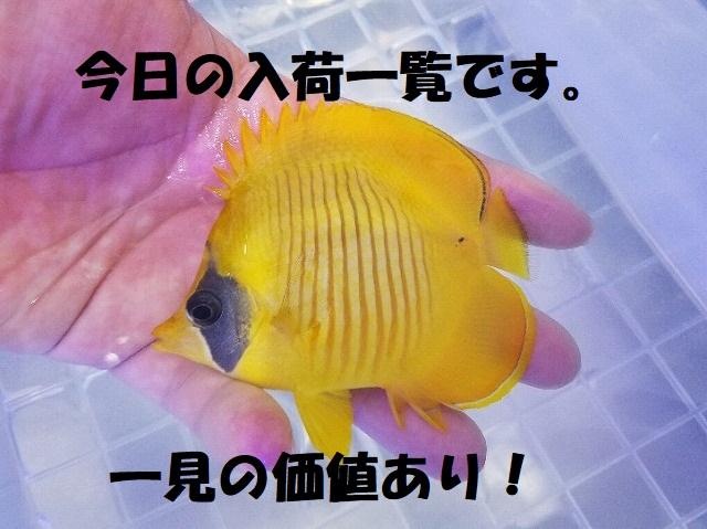 春日井店 海水ブログ 200317
