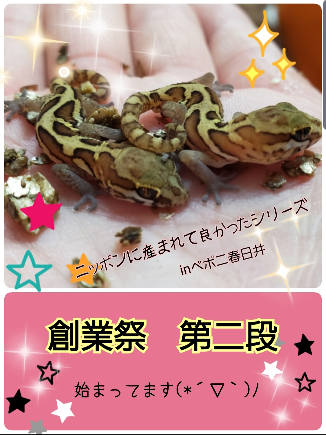 【春ペポニ】連休特価!二日目始まります!