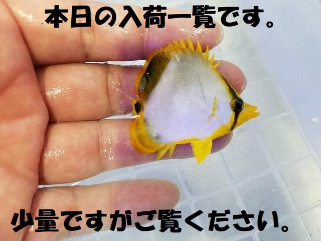 春日井店 海水ブログ 200321