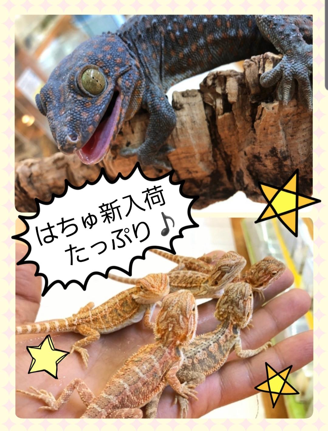 【春ペポニ】爬虫類新着続々!!