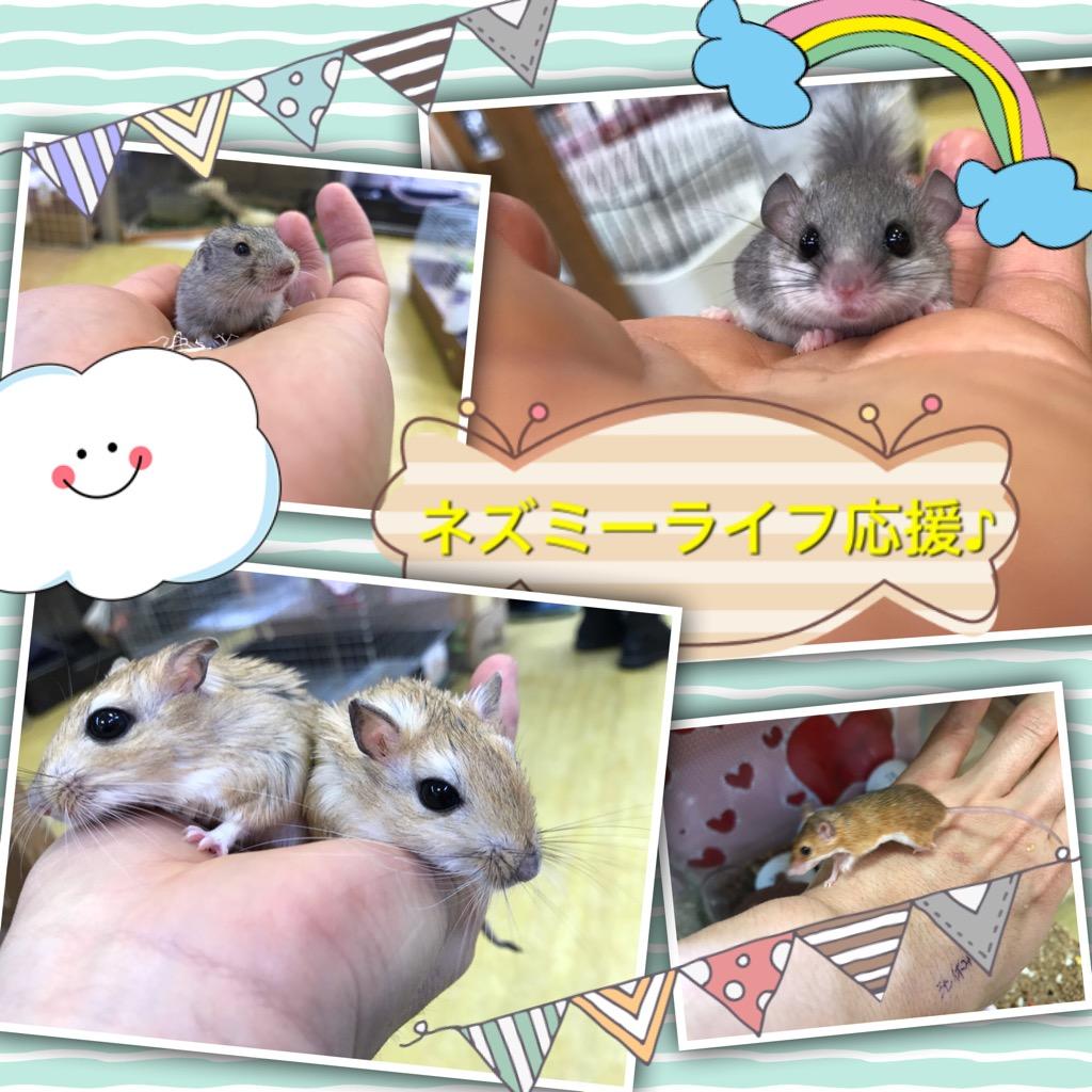 【インター小動物】ネズミラーーーッシュ!!!