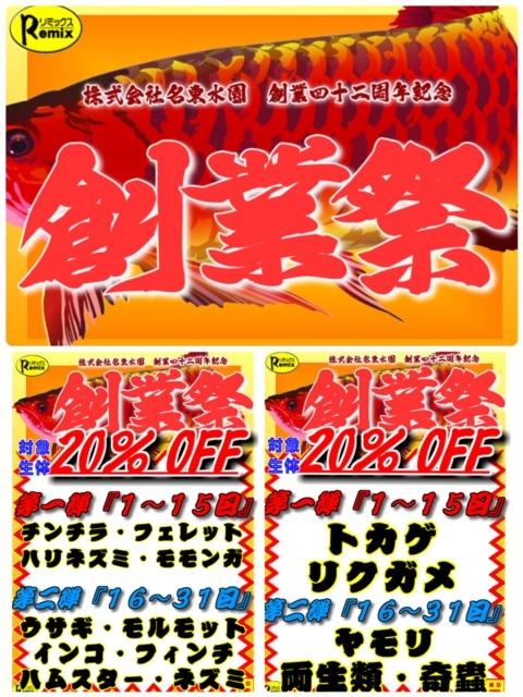 【春ペポニ】創業祭1stステージ開催中★