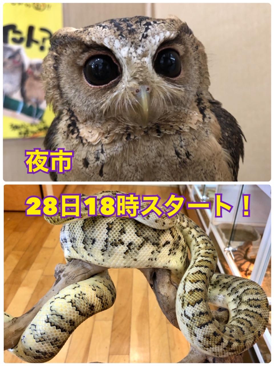 【春ペポニ】28日「夜市」@春ペポ