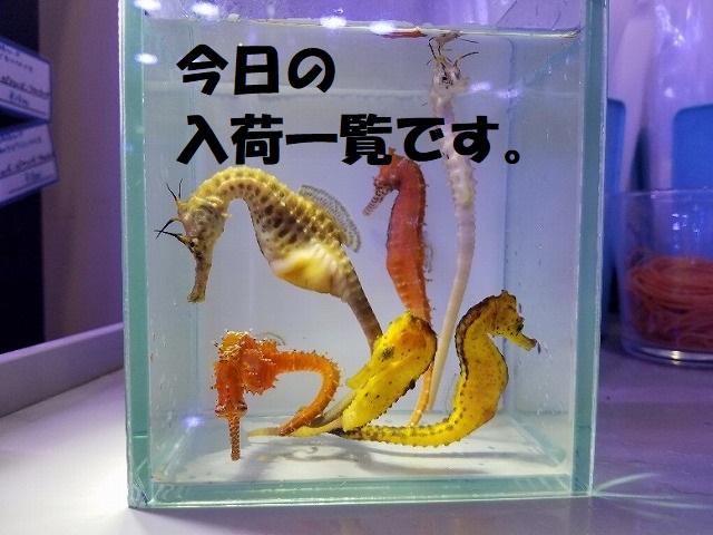 春日井店 海水ブログ 200410