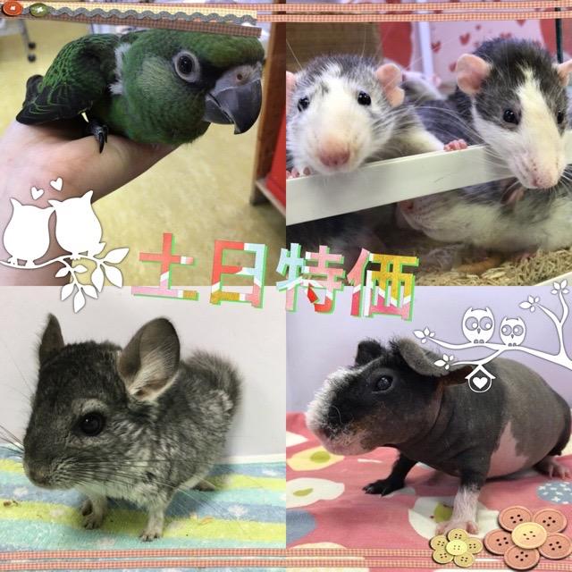【インター小動物】週末は更にお得に♪♪土日特価です!!