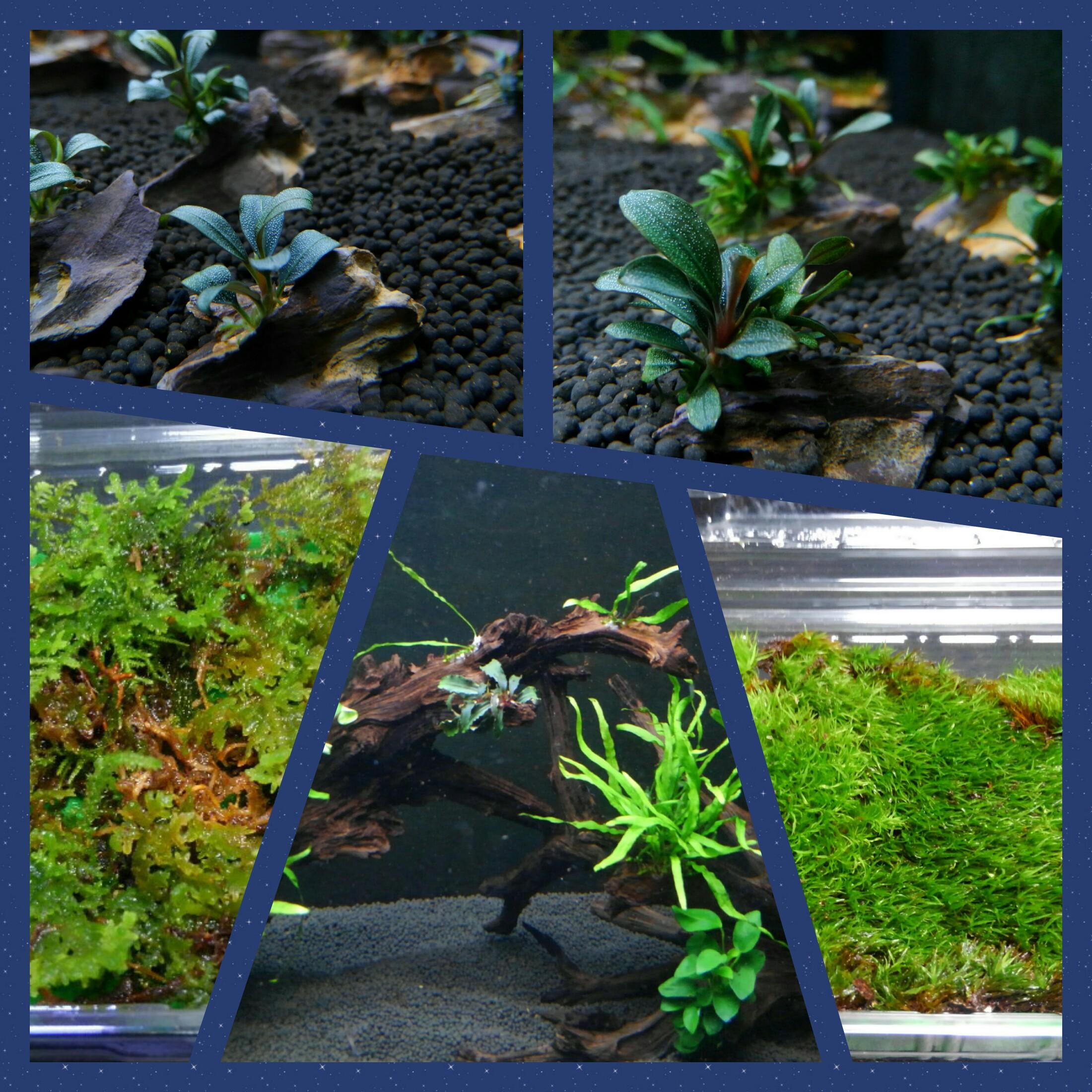 植物が色々入荷しています!