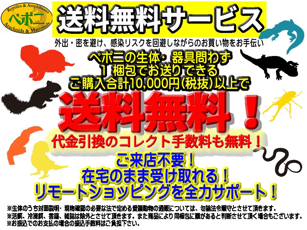 【春ペポニ】本日よりスタート!ペポニのアイテム1万円以上お買い上げで送料無料!