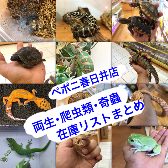 【春ペポニ】両生・爬虫類・奇蟲在庫リストまとめ