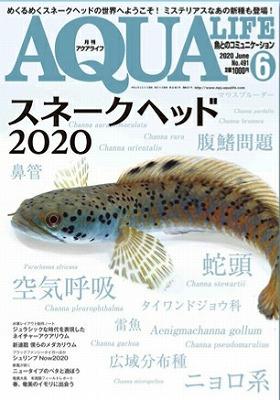 新刊のお知らせ