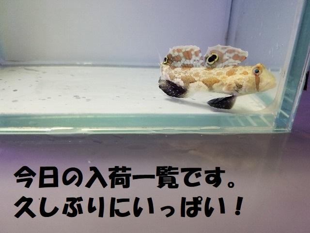 春日井店 海水ブログ 200522
