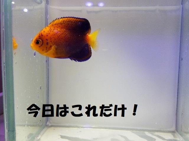 春日井店 海水ブログ 200526