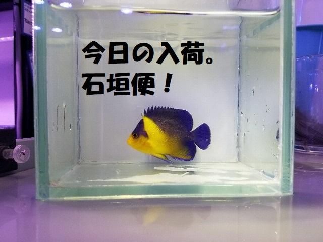 春日井店 海水ブログ 200602