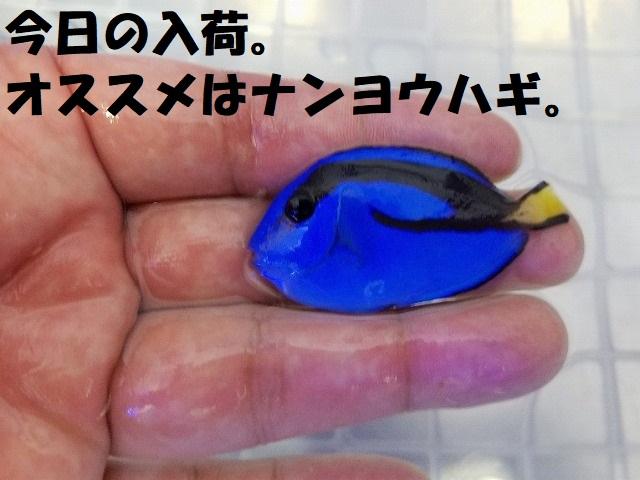 春日井店 海水ブログ 200606