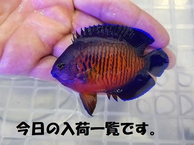 春日井店 海水ブログ 200609