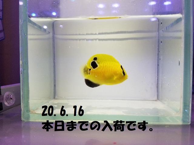 春日井店 海水ブログ 200616