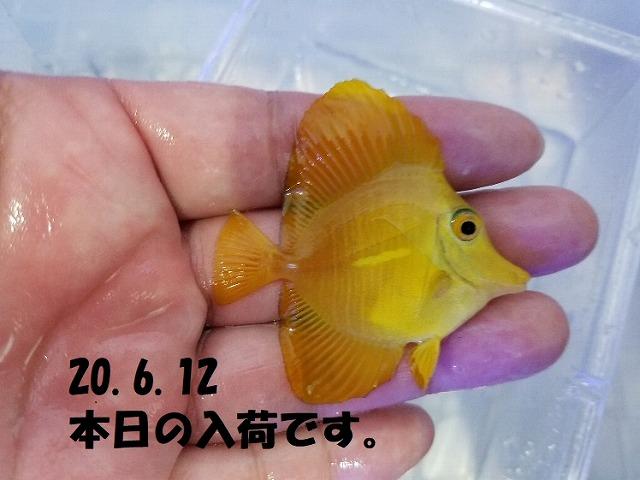 春日井店 海水ブログ 200612